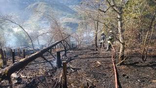 3000 Quadratmeter Wald brennen ab – Kanton erlässt Warnung