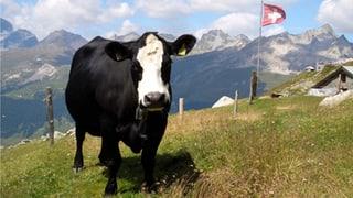 Video «Kuh-Schweiz? (2/6)» abspielen