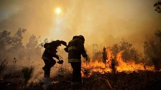 Waldbrände fordern mindestens sechs Tote