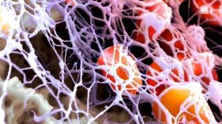 Generationenwechsel bei Blutverdünnern