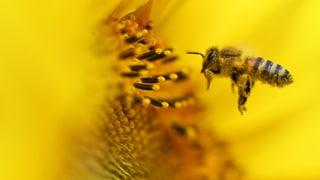 Erstmals viel Honig aus dem Luxus-Bienenhaus