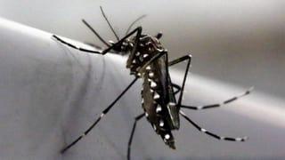 WHO: Europa soll Schutzmassnahmen gegen Zika-Virus ergreifen