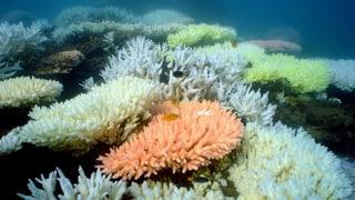 Australien kämpft gegen Riff-Blamage