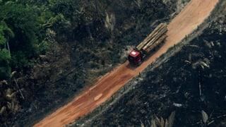 «Bolsonaro will den Amazonas zum Kassenschlager machen»