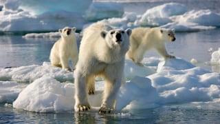 Cussegl arctic vul proteger meglier il clima