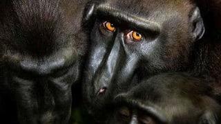 Tierfotos lockten viele Besucher ins Naturhistorische Museum