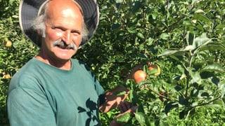 Weniger Pestizid dank alten, robusteren Apfelsorten