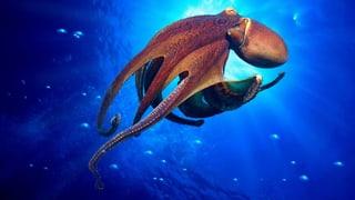 In der Tiefe des Meeres auf der Höhe der Zeit  (Artikel enthält Audio)