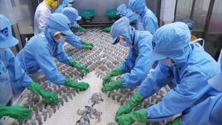Salmonellen in Crevetten: «Leckerbissen» aus der Kloake