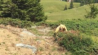 Arosa: Avert Parc d'urs cun festa e prominenza