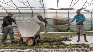 Nur wenige Flüchtlinge eignen sich als Bauernhelfer