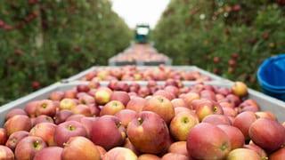 Thurgau prüft «Agro Food Innovation Park»