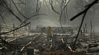 Waldbrände in Kalifornien sind vollständig eingedämmt