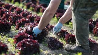 Landwirtschaft schuld an «toxischen» Bächen
