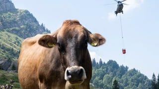 Mehr als 1300 Tonnen Wasser für durstige Kühe in einem Monat