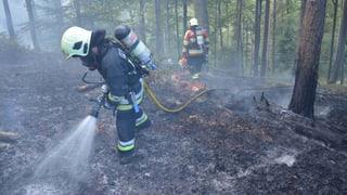 Waldbrandgefahr: Hitze und Trockenheit setzen den Wäldern zu