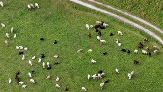 Schwieriges Jahr für Landwirtschaft im Mittelland