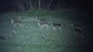 Video «Folge 9: «Wildzählung im Unterengadin»» abspielen