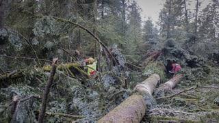 Berner Wälder haben mehr gelitten als angenommen