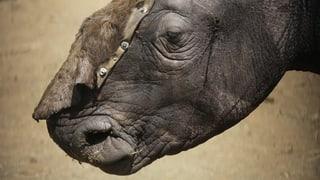 China schont Tiger und Nashorn doch
