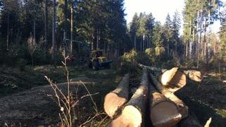 Die Gütesiegel für faires Holz – ein Überblick (Artikel enthält Audio)