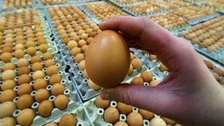 Nach dem Pferdefleisch die Bio-Eier