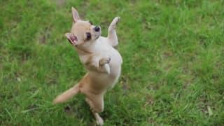 Video «Tiere, die Geschichte schrieben: Kameraden (4/6)» abspielen