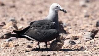 Wenn Wasservögel auf dem Trockenen sitzen (Artikel enthält Audio)