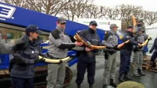 Frankreich zerstückelt drei Tonnen Elfenbein