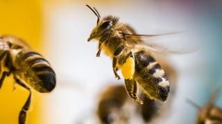 Die Sorge war gross, als im September die Bienenpest ausbrach