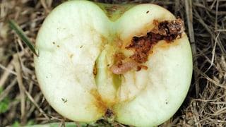 Viren aus der Schweiz im Einsatz gegen Schädlinge