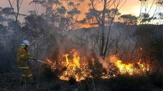Buschbrände: Sydney leidet unter frühzeitiger Hitze