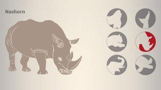 Wilderei bedroht Artenvielfalt
