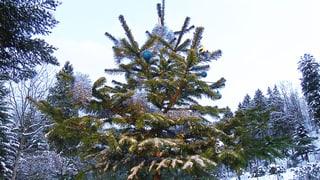 Tipps für einen frischen Christbaum