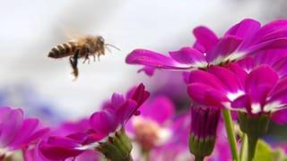 Bienensterben: Forscher finden deutliche Worte