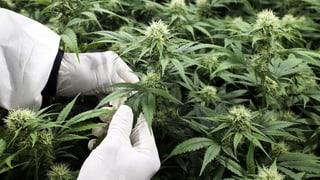 Kommt nun das Cannabis auf Rezept?