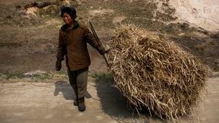 Fehlende Lobby: Kaum Spendengelder für Nordkorea