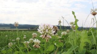 Bienenfreundliche Landwirtschaft hilft der Natur