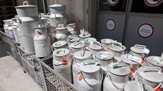 Milchproduzenten bangen um die Existenz