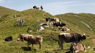 Vorarlberg sieht Tradition in Gefahr