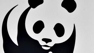 «Der Bär ist unnötig gestorben»