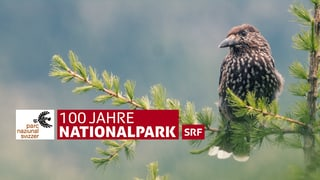 100 Jahre Nationalpark: Gespräche, Wissenswertes, Tiere in Aktion