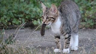 Die Katze als Helferin der Wissenschaft