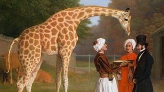Die Giraffe, die in Frankreich Furore machte