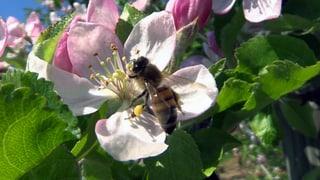 Video «Bienen: Die Frage der Bienen (1/3)» abspielen