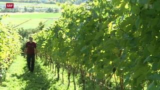Spitzenweine dank Innovation im Thurgau
