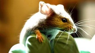 Tierversuche verstehen: Wenn die Forschung Transparenz verspricht