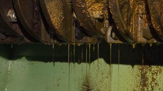 Wird Palmöl in der Schweiz bald billiger?