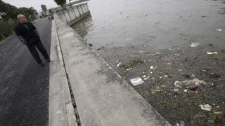 China: Rätsel um tote Schweine im Fluss