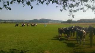 Auf dem Birrfeld verbessert Polospielen das Grundwasser